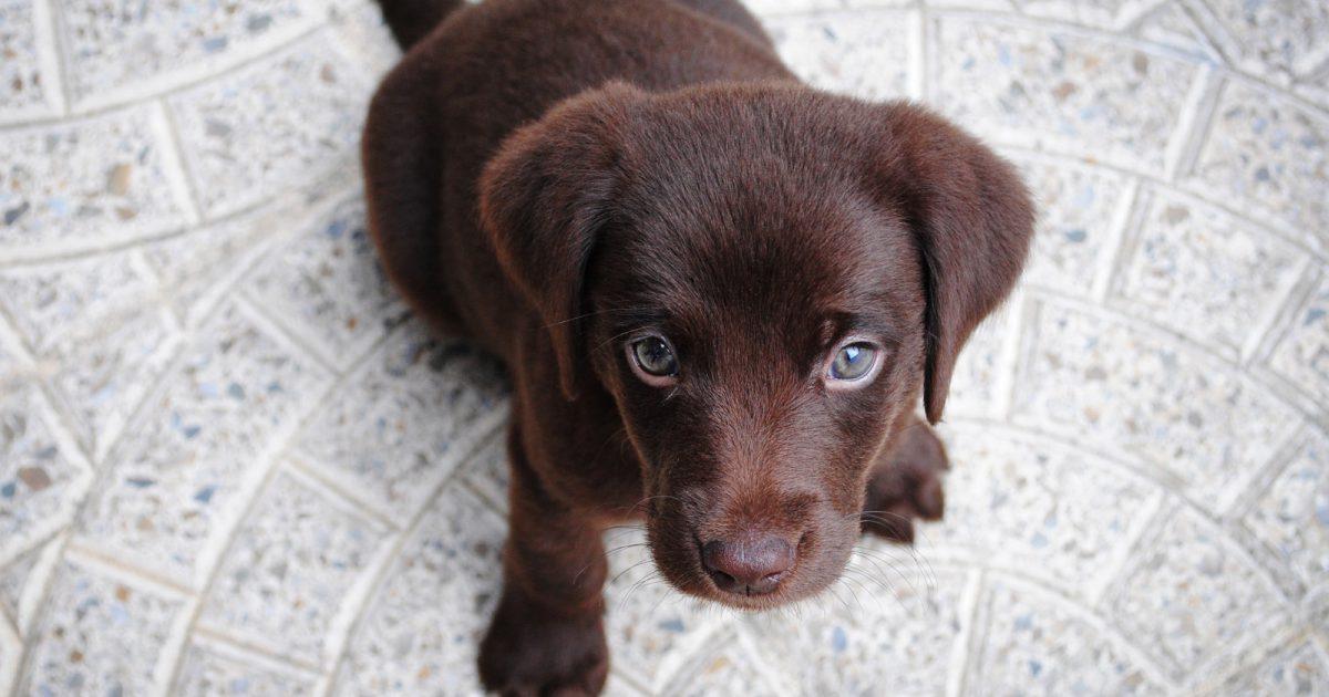 犬は雑音の中でも自分の名前を聞き取れる 新研究 National Geographic